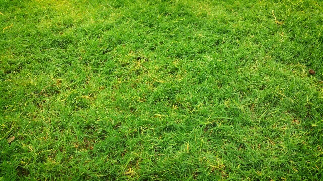 Gele plekken in het gazon door droogte