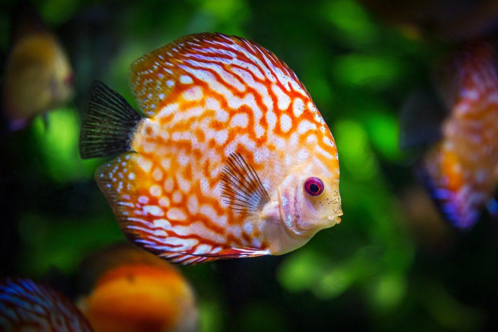 Goedkope led verlichting aquarium